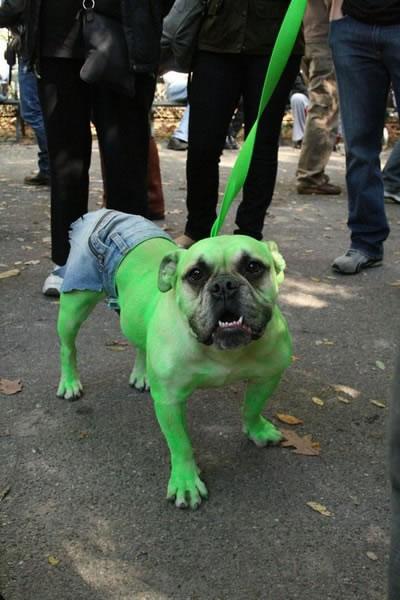 Perro Hulk